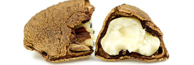 La noix du Brésil: un savoureux antioxydant