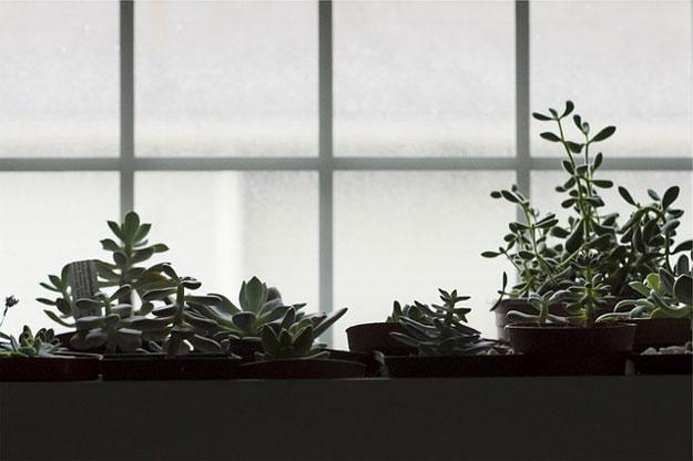 plantes-interieur-fevrier