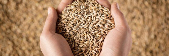 Les céréales complètes diminuent le risque de maladies cardiovasculaires