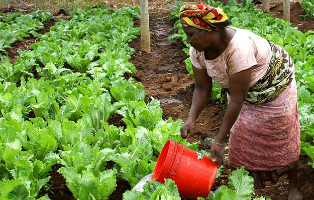 femme-terre-arable-culture-afrique-tanzanie