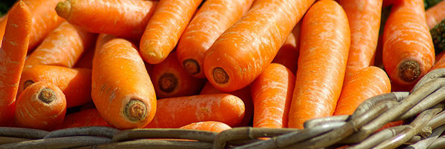 amap-panier-legumes-carottes-03-ban