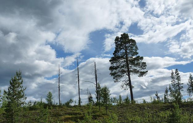 couverture-forestière-déforestation