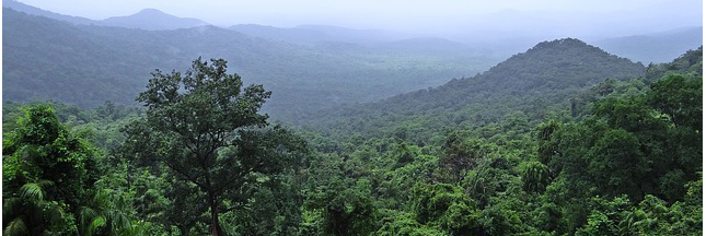 Global Forest Watch : un projet de suivi mondial sur la couverture forestière