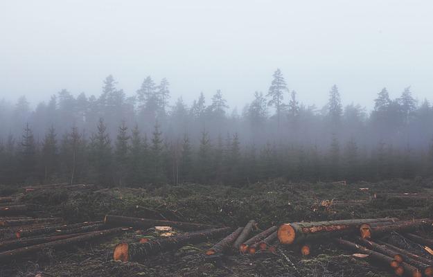 déforestation-couverture-forestière