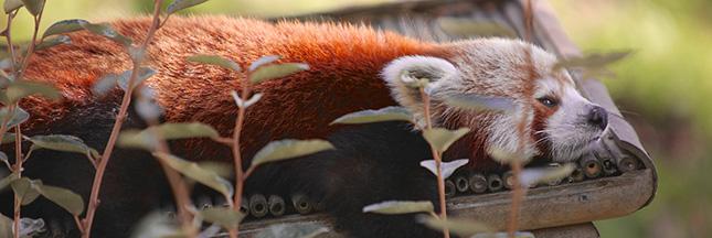Le zoo de Lille rouvre ses portes : photos