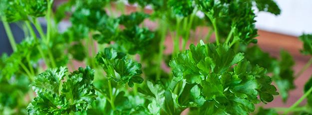 persil-herbe-aromatique-aromate-cuisine-recette-03