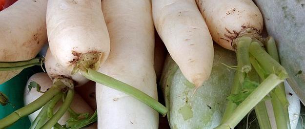radis-blancs-legume