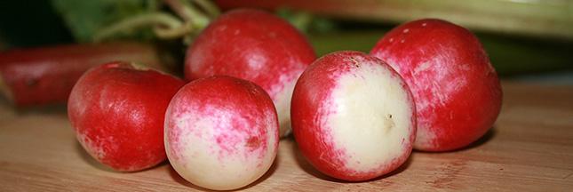 Velouté doux de radis rose et radis noir
