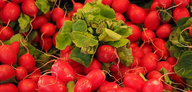 radis-rouges-legumes-01