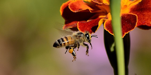 abeille-contre-les-pesticides-01
