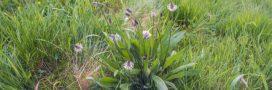 14 plantes sauvages comestibles: guide pratique
