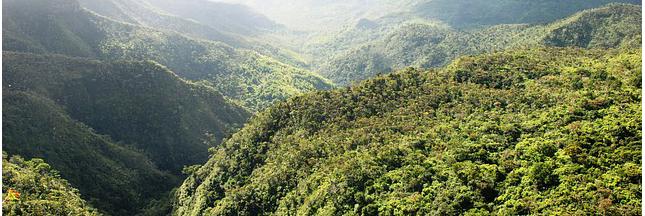 Reforestation : l'Équateur établit un record mondial