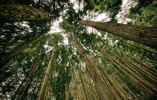 reforestation-equateur-record-mondial