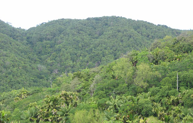 reforestation-record-mondial-equateur