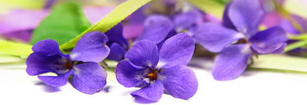 violettes : fleurs sur une table - © Shutterstock http://www.shutterstock.com/fr/pic-136827737/stock-photo-background-with-viola-flowers.html