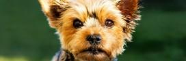 Cosmétiques: plus de tests sur les animaux en Nouvelle-Zélande