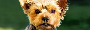 Cosmétiques : plus de tests sur les animaux en Nouvelle-Zélande
