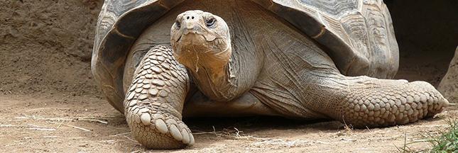 Espèces menacées: 10 espèces qui ne le sont plus [Carte interactive]