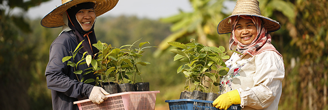 TREEZ: un engagement profond pour la reforestation