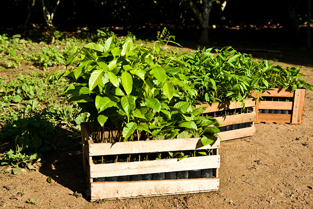 treez-projet-reforestation-agroforesterie-03