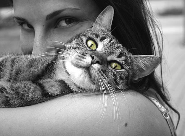 animal-domestique-chat-chien-marché-vétérinaire
