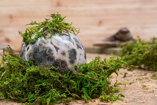 anti mousse naturel au jardin bio, anti mousse gazon