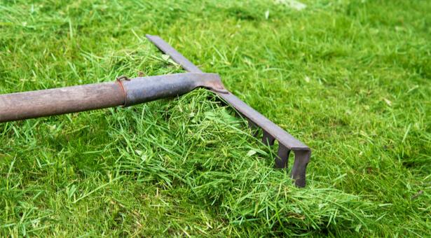 paillage tonte de pelouse pailler potager jardin bio