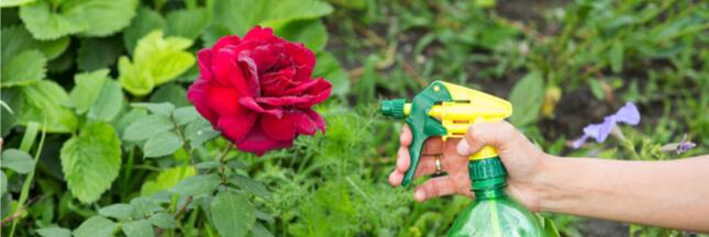 Comment fabriquer son propre insecticide naturel?