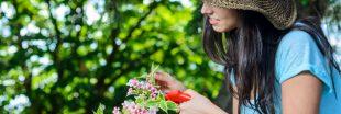 Soins naturels : cultivez votre beauté... avec les fleurs de votre jardin