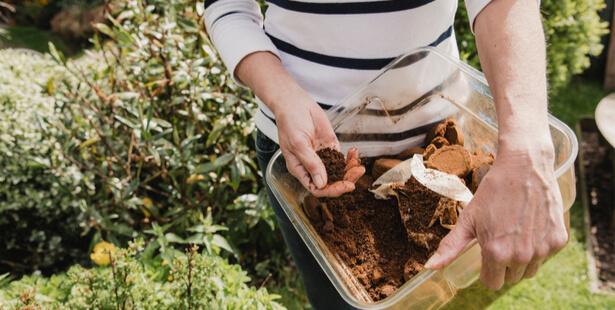 fabriquer son propre insecticide naturel