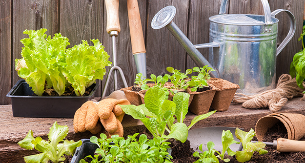 Les bons outils ne font pas le bon jardiner, mais ça aide © Shutterstock http://www.shutterstock.com/fr/pic-246478135/stock-photo-seedlings-of-lettuce-with-gardening-tools-outside-the-potting-shed.html