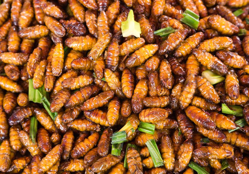 Manger des insectes attention danger pr vient l 39 anses - Que mange les punaises ...