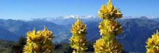Recette apéritif : 4 vins naturels maison aux plantes médicinales