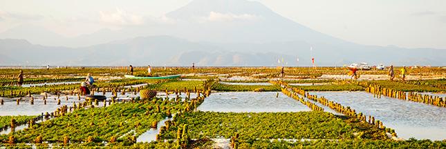 Agrocarburant : le potentiel et les dangers de la bioénergie