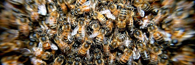 La soupe d'abeille contre le syndrome d'effondrement