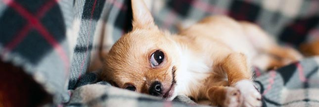 'Bio', 'healthy', 'premium' : rien n'est trop beau pour nos chiens et chats ?