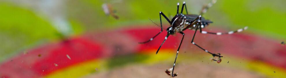 Un été sans moustique