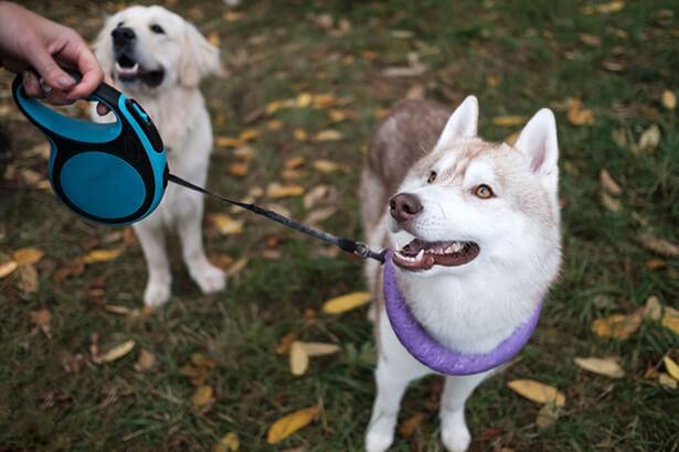 garde animaux particulier promener des chiens
