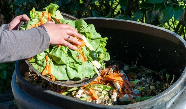 jardin bio jardin naturel jardiner sans pesticide engrais