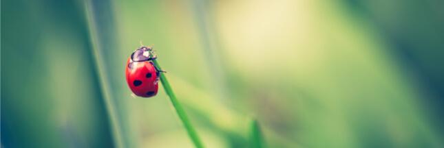 Lutte biologique : 18 animaux pour lutter contre les ravageurs au jardin