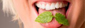 Apportez de la fraîcheur à votre peau avec nos 7 recettes beauté à la menthe