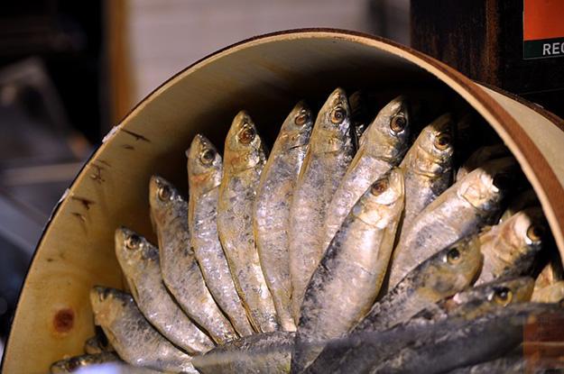 sardine-peche-conserve-poisson-portugal