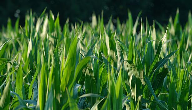 agrocarburant terrain troisième génération bioénergie