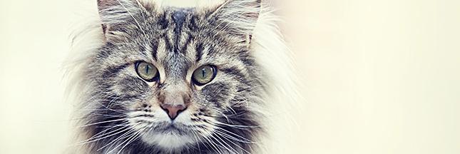 Comment soigner l'arthrose du chat naturellement ?