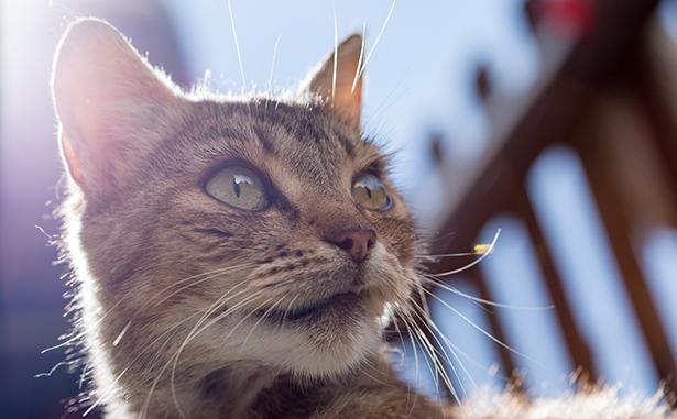 arthrose du chat conseils naturels