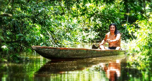 amazonie déforestation charbon de bois sol