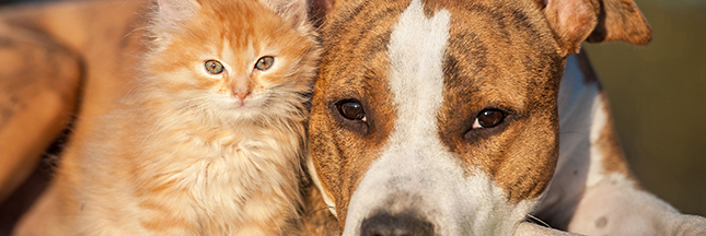 Les droits des animaux égaux à ceux des hommes : vers la 'personne non humaine'