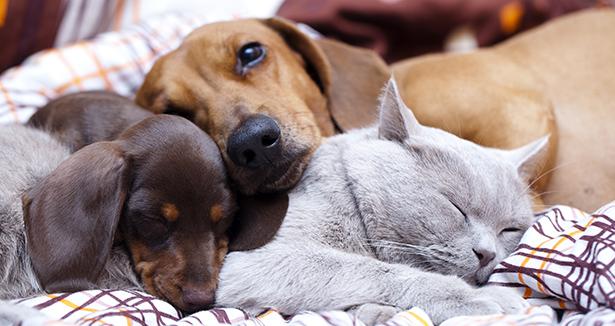 droits des animaux espagne personne non humaine