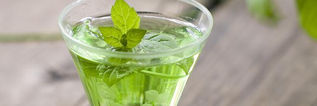 liqueur vin mélisse berce basilic plante recette maison