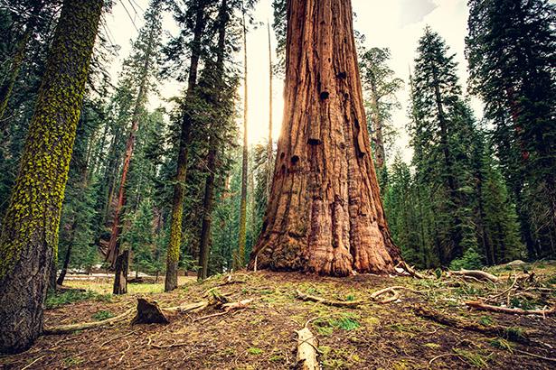 parc national usa parcs nationaux pollution de l'air